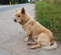 pies, pruszcz gdański, Urząd Miasta, www.polnocna.tv, www.strefahistorii.pl